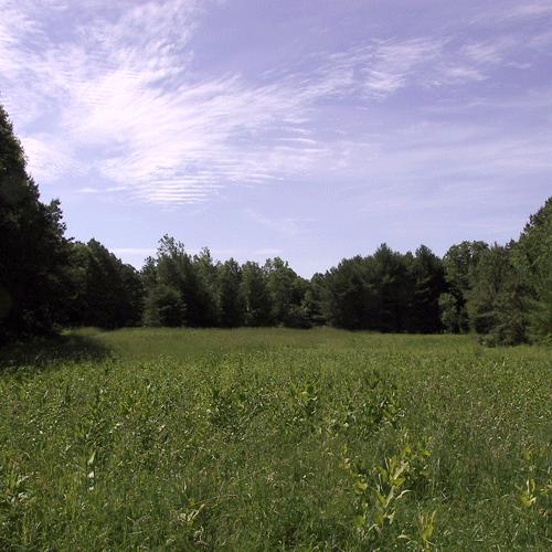 Carolina-MA-field-160-6083